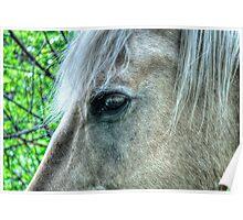 Eye of the Pegasus Poster