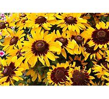 Bright Summer Flowers Photographic Print