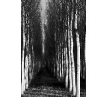 ghostly williows Photographic Print