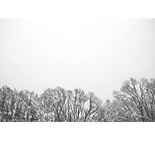 Snowy tree tops at Sunny Corner Photographic Print