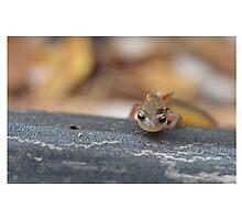 Climbing Salamander Photographic Print