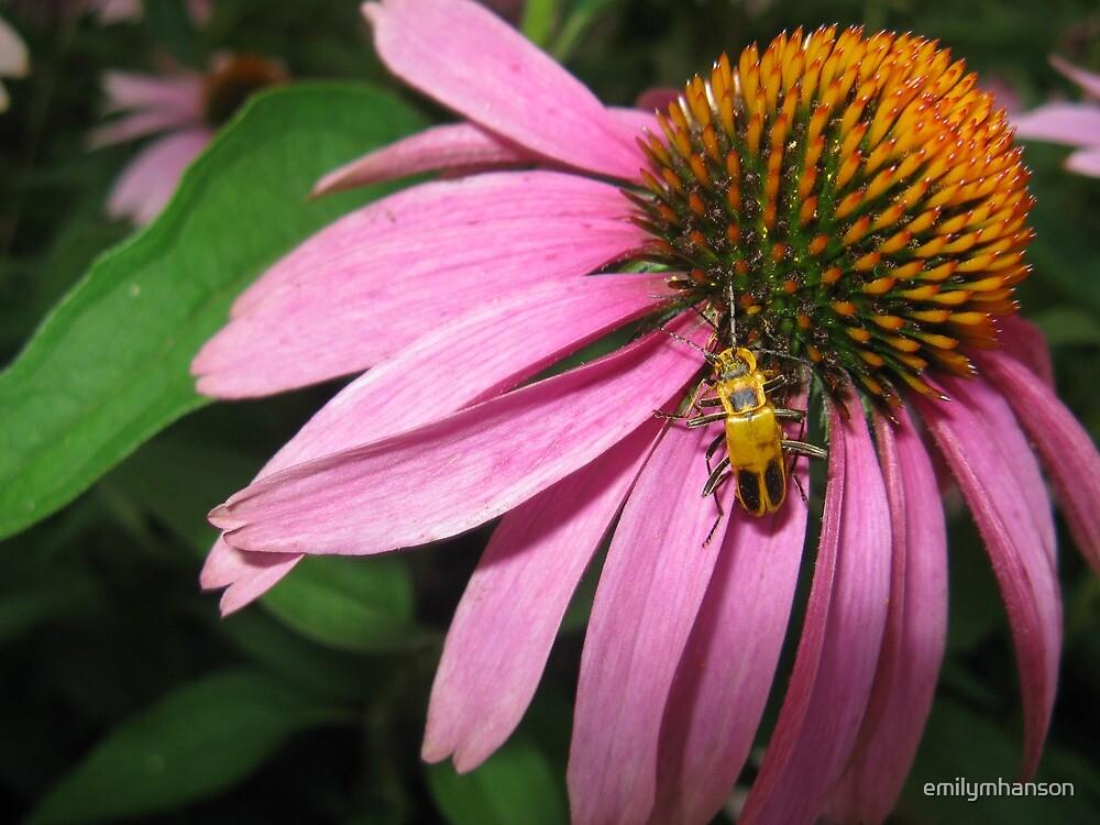Coneflower with Yellow Bug by emilymhanson