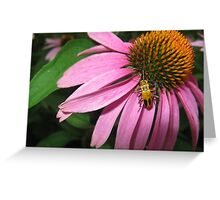 Coneflower with Yellow Bug Greeting Card