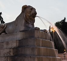 Rome's Fabulous Fountains - Piazza del Popolo Lion by Georgia Mizuleva