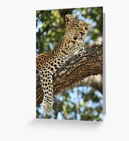 Leopard in repose - Okavango Delta, Botswana. Greeting Card