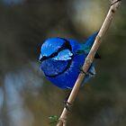 Blue Boy by inAWE