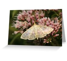 Mother Of Pearl Moth Greeting Card