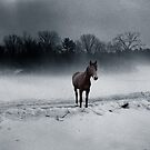 Quarterhorse in the Mist by Wayne King
