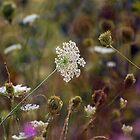Wildflower Field by piecesofnature