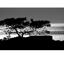 Torrey Pine Tree Silhouette Photographic Print