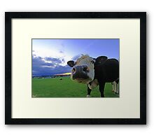 Cows & Storms Framed Print