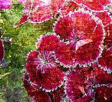 Lovely Flowers. by Vitta