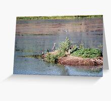 Bird Island- Willow Lake Greeting Card