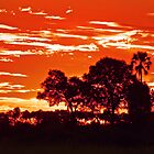 Sunset around kwetsani okavango delta by jozi1