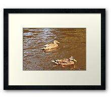 Duck3 Framed Print