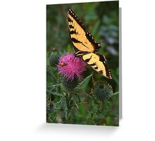 Swallowtail & Beetle on Thistle Greeting Card