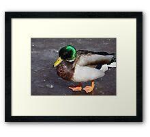 Duck7 Framed Print