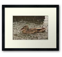 Duck12 Framed Print