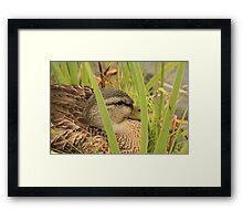 Duck13 Framed Print