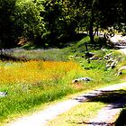 Walking trail  -Mckenzie Preserve California by MarthaBurns