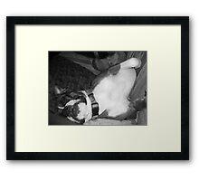 zzzzzzzzzz Framed Print
