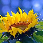 Summer Sunflower - Park City, Utah by FoxSpirit