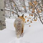 Red Fox Returning Home - Park City, Utah by FoxSpirit