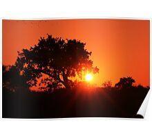 Bushveld Sunset, Alldays, Limpopo, South Africa Poster
