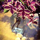 White-Edged Lilac by Barbara Wyeth