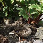 Mother and Ducklings by Dawnsuzanne
