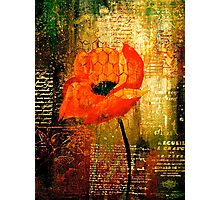 The Poppy Journals...Trapped Photographic Print