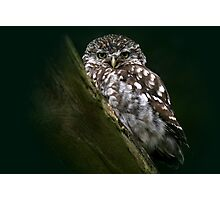 The Little Owl - None Captive Photographic Print