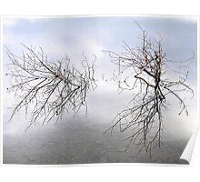 Natural Lake Reflections Poster