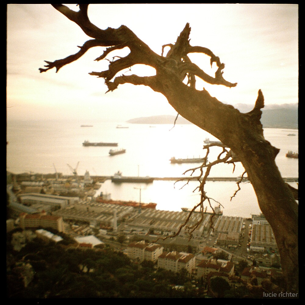 tree over gibraltar by lucie richter