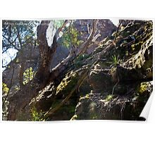 Forest Redgum - Gardens of Stone Poster