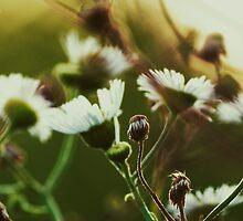 Sunset Weeds by vivalacourtnehh