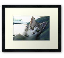 Secret admirer Framed Print
