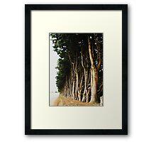 Tree Lined Road Framed Print