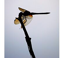 Sillouette of Wings Photographic Print