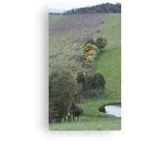 Valley Vineyard Canvas Print