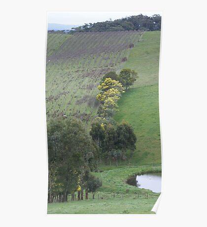Valley Vineyard Poster