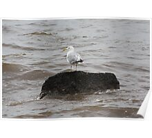 Sea Gull on a Rock 1219 Poster