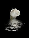 White on Black by Sandy Keeton