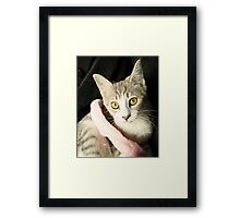 If these eyes could talk Framed Print