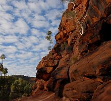 Palm Valley, Central Oz by Richard  Stanley