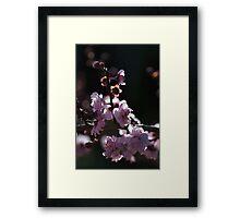 Backlight on Blossom Framed Print
