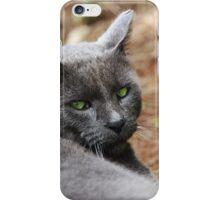 Portrait of a gray cat iPhone Case/Skin