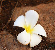 Exotic plumeria flower  by VikaL