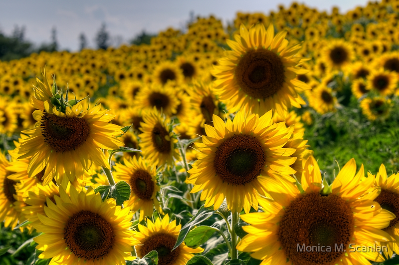 Standing Tall Among the Rest by Monica M. Scanlan