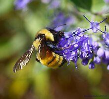 Nicole's Bee by Katagram